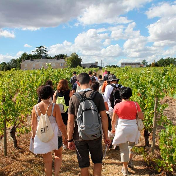 Vignes - Vins - Randonnée - Anjou tourisme - Gîte avec piscine - La Maison de Gabin & Augustin